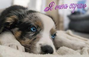 Я очень скучаю, грустная собачка