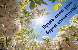 Весенние деревья на фоне солнечного неба