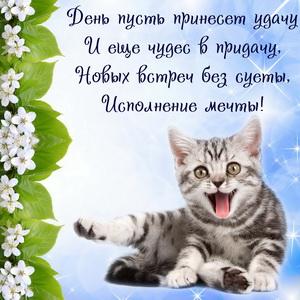 Красивый котенок с пожеланием удачи