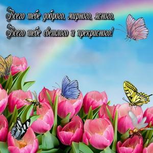 Бабочки на розовых тюльпанах