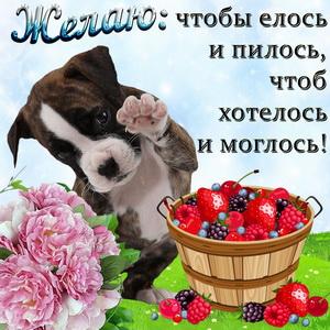 Собачка и корзинка с ягодами