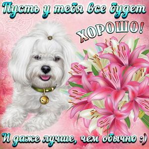 Милая собачка и букет цветов