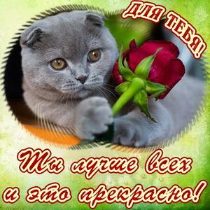 Котик с красной розой для тебя