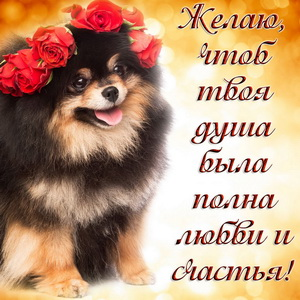 Забавная собачка с венком из роз