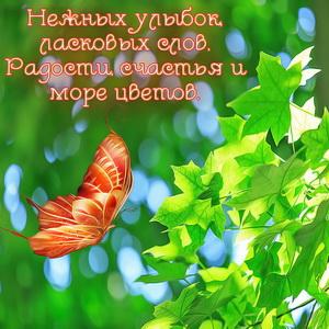 Бабочка у кленовых листиков