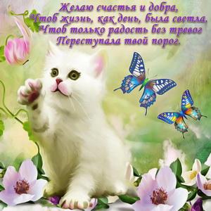 Белый котёнок в красивом оформлении