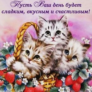 Милые котята желают счастливого дня