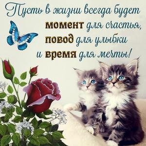 Картинка с милыми котятами и розочкой