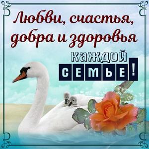 Картинка с милыми лебедями и пожеланием в рамочке