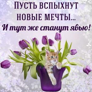 Картинка с пожеланием и котёнком среди тюльпанов