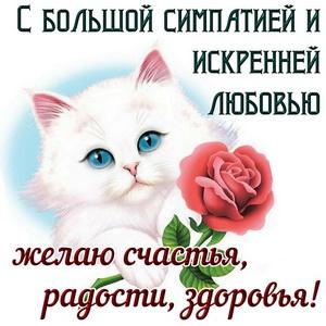 Белый котик с розочкой желает счастья и здоровья