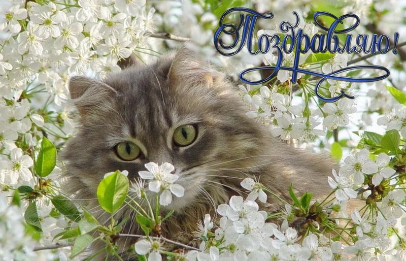 Открытка, поздравляю, котик в цветах