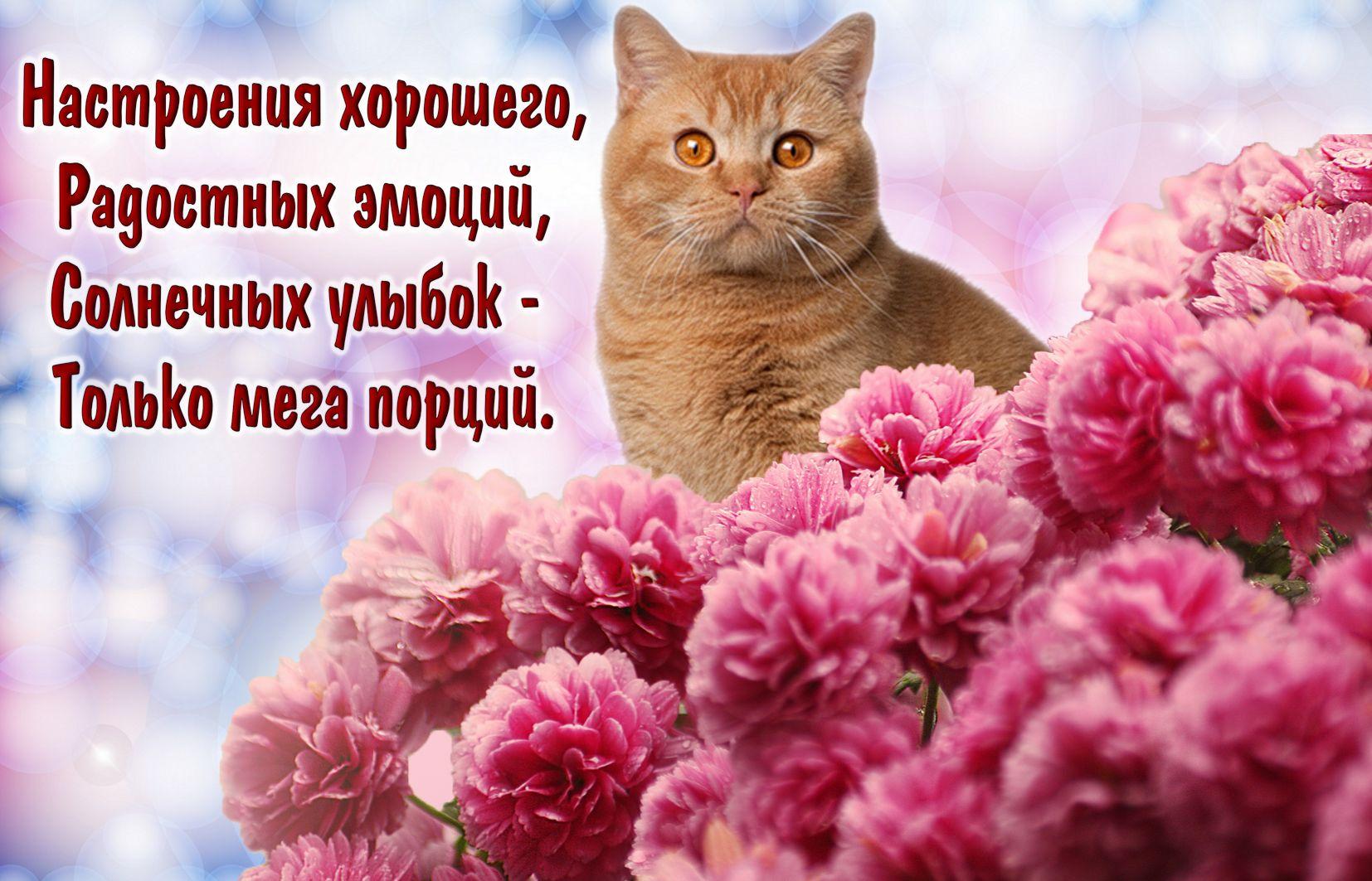 Рыжий котик среди красных цветов