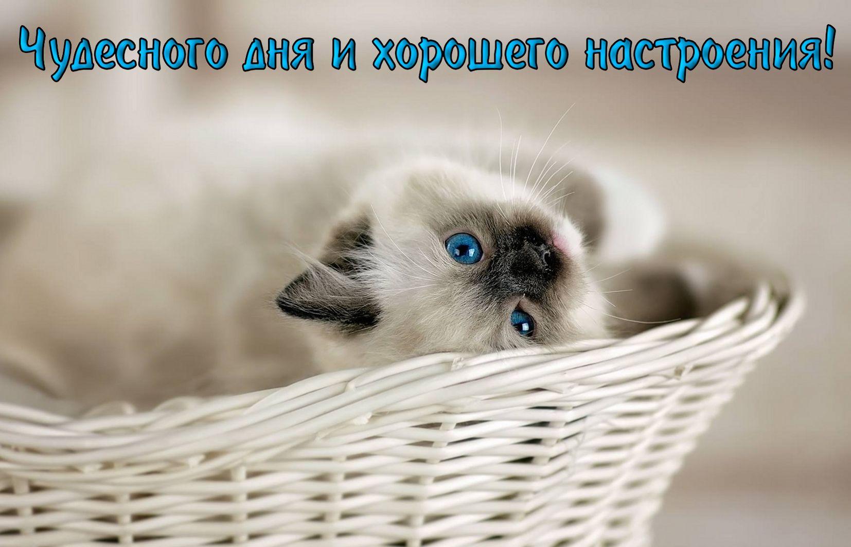 Милый котик желает хорошего настроения