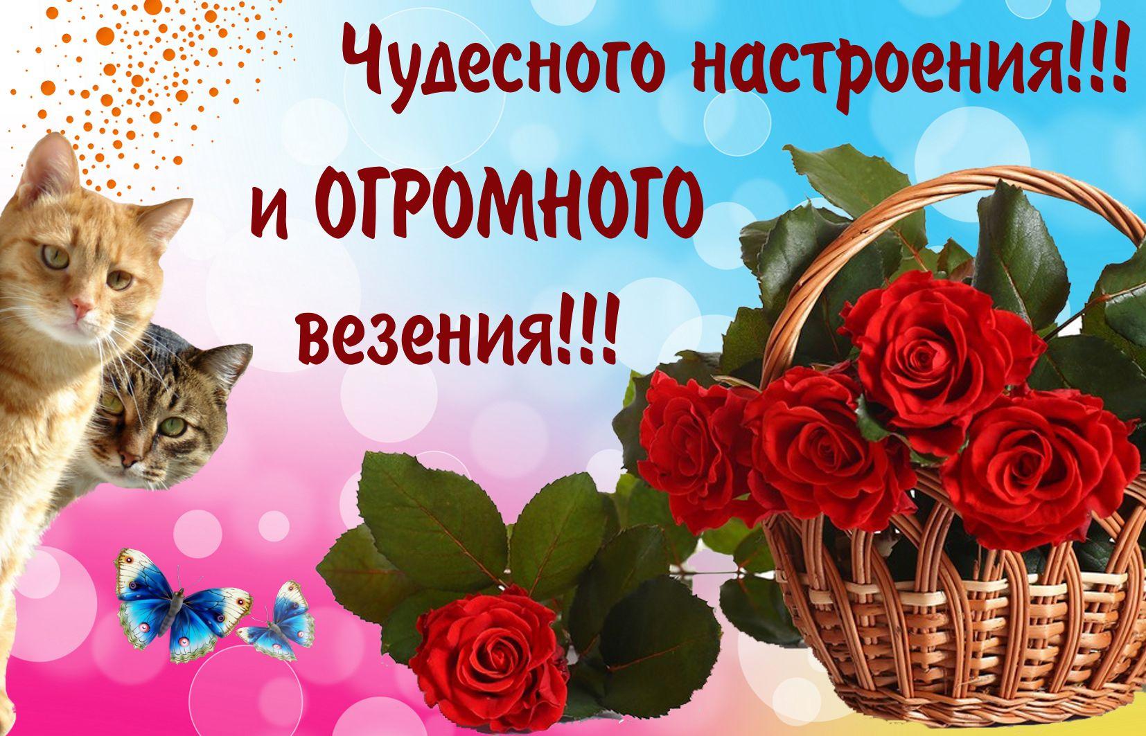 Открытка с красными розами и котиками
