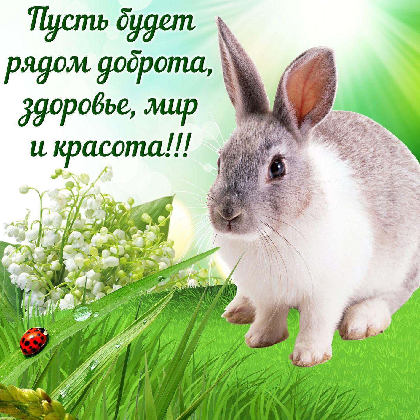 Открытка с милым кроликом на травке и пожелание