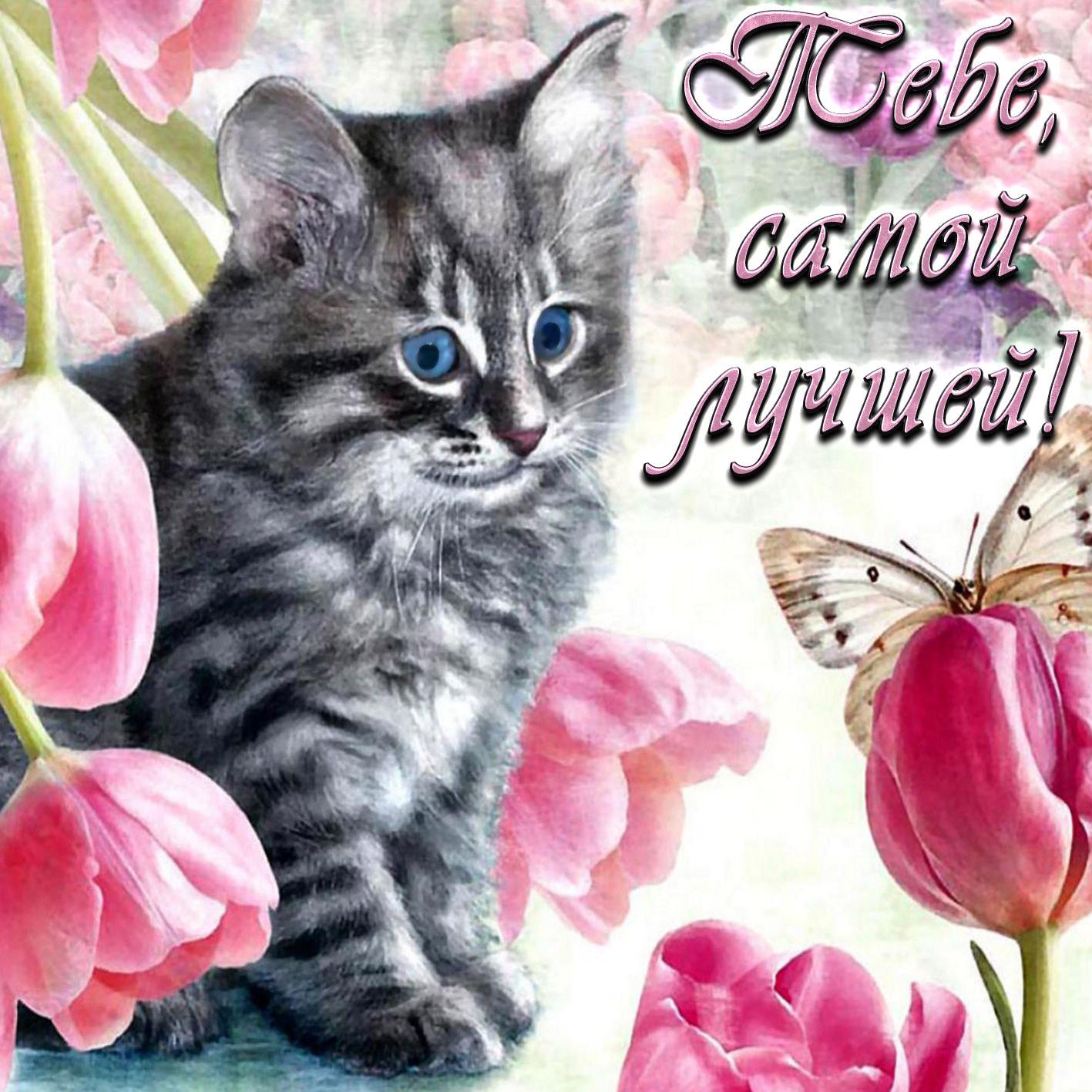 Открытка с котиком на фоне цветов и с пожеланием