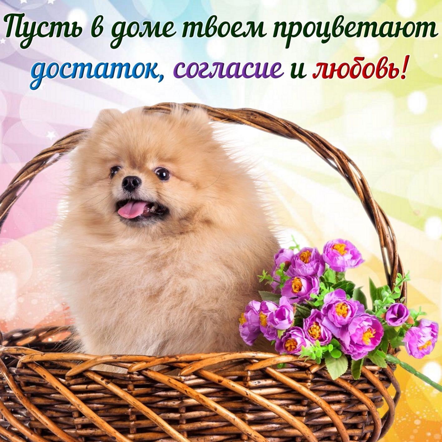 Открытка с пожеланием - пушистая собачка в корзине с цветами