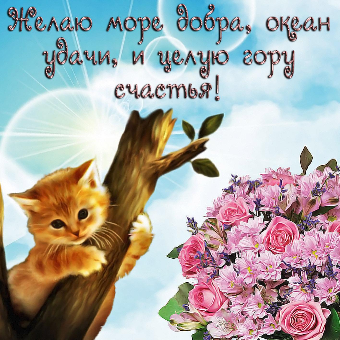 Месяца, красивые открытки с пожеланием удачи счастья на каждый день