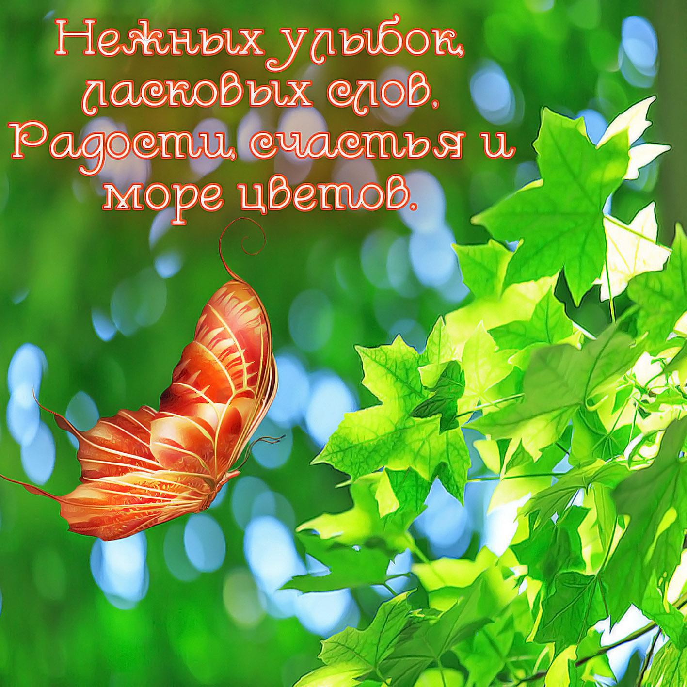 Открытка с пожеланием - бабочка у кленовых листиков