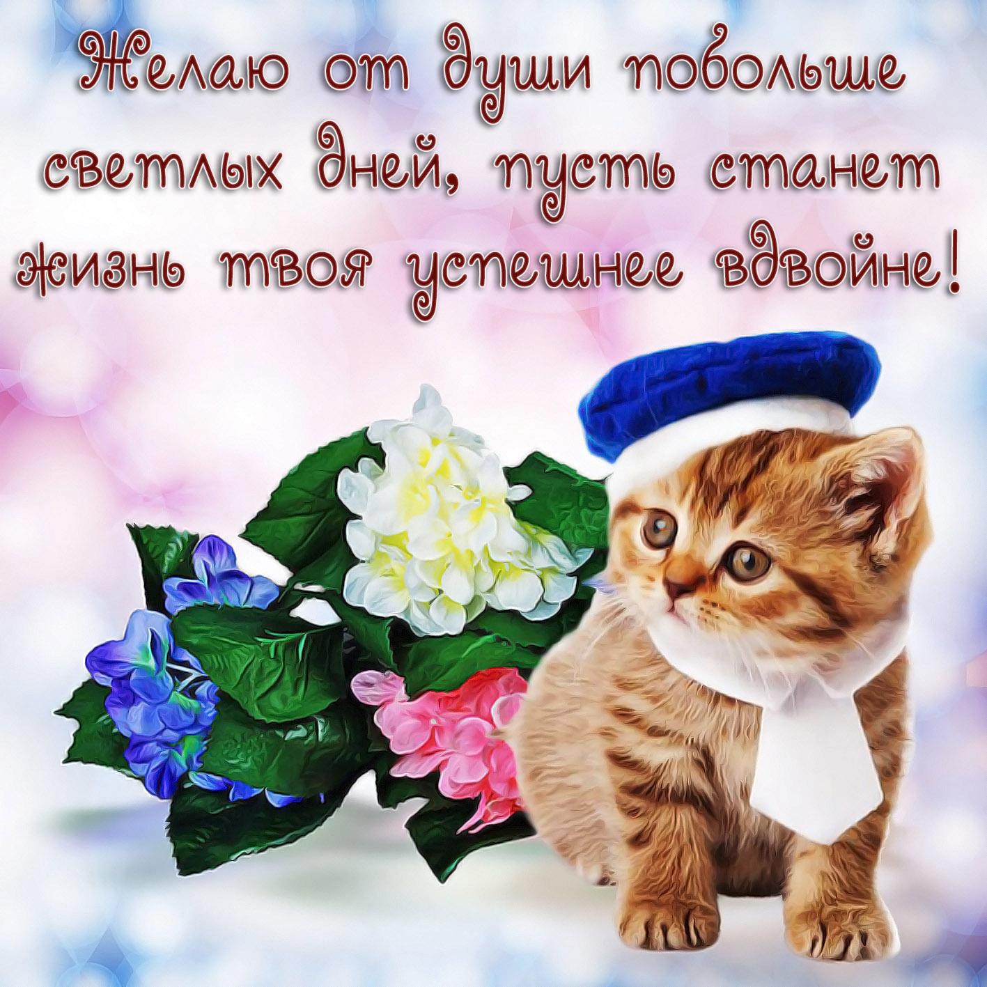Открытка с пожеланием - котик в шапочке и цветочки