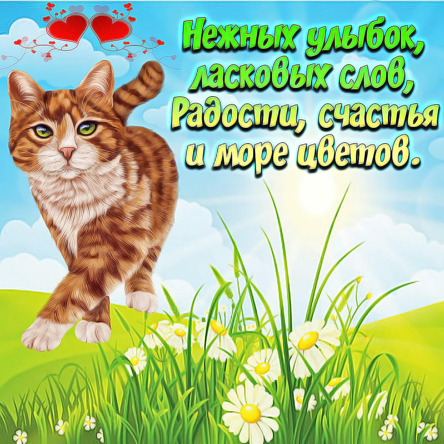 Картинка с рыжим котом и пожеланием