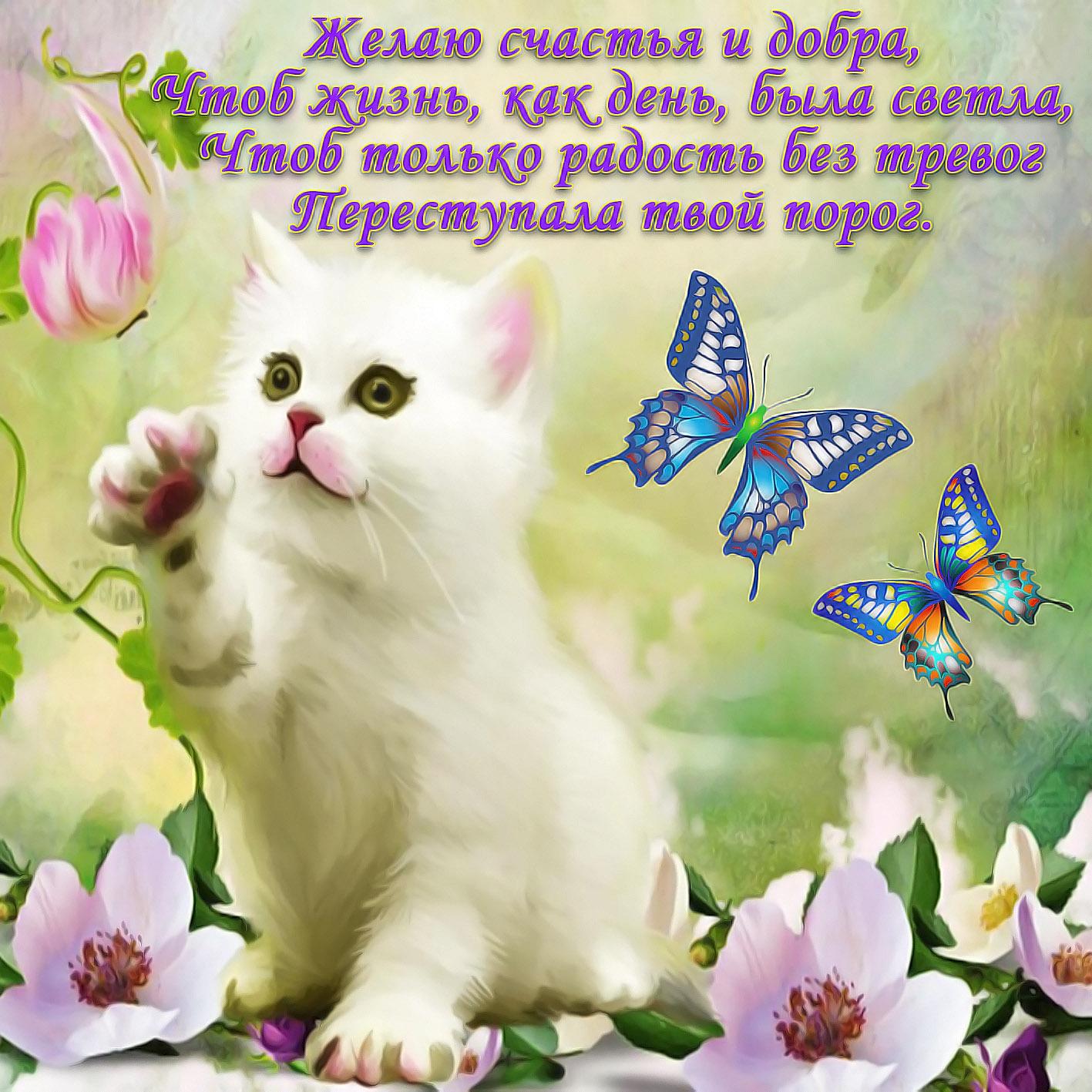 Открытки красивые котят с пожеланиями, юбилеем бабушке