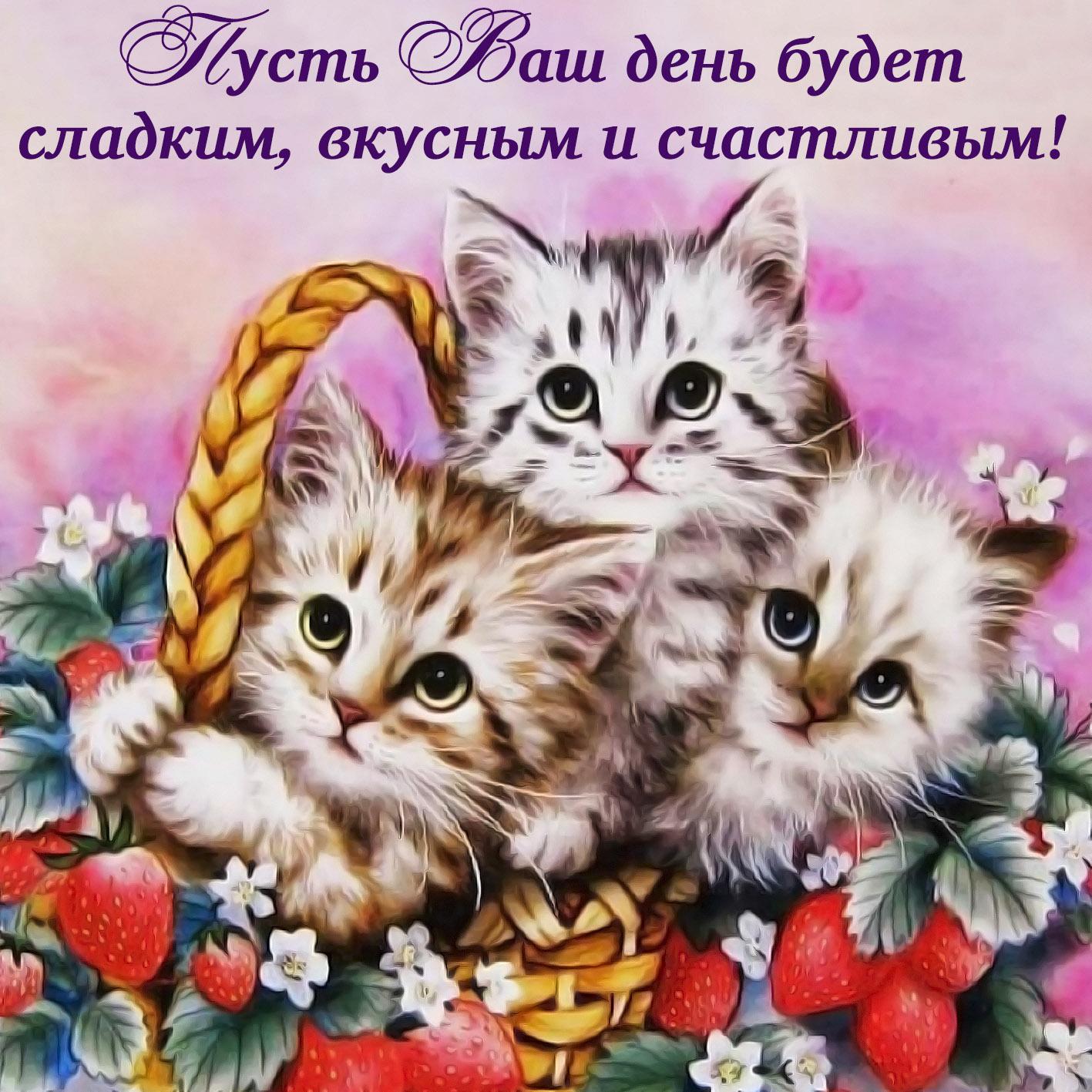 Открытка - милые котята желают счастливого дня