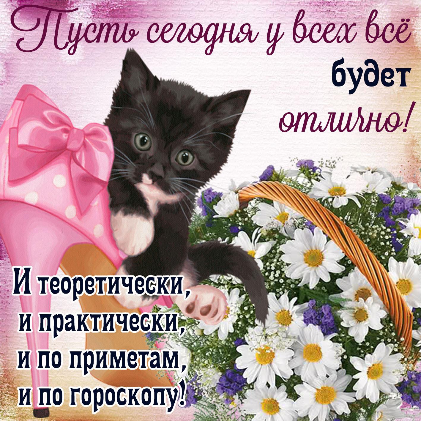 Красивая открытка с котёнком и ромашками
