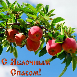 Ветка с яблоками на фоне неба