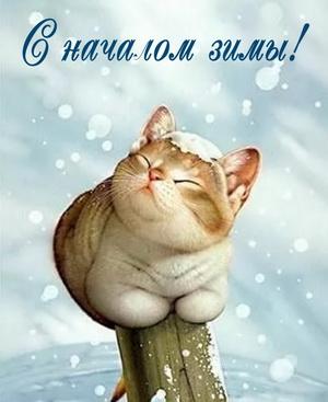 Красивый котик радуется началу зимы