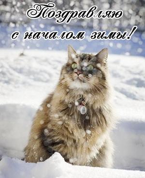 Пушистый котик поздравляет с началом зимы