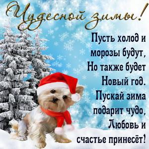 Забавный пёсик желает чудесной зимы
