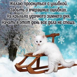 Картинка с котёнком и зимним пожеланием