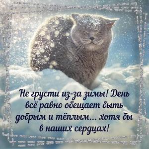Открытка с котиком на снегу в рамочке