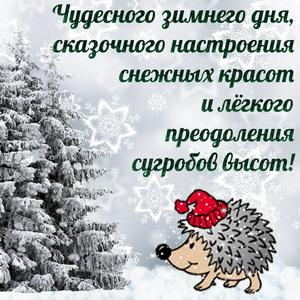 Ёжик в шапочке желает чудесного зимнего дня