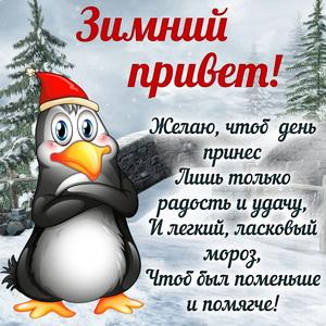 Картинка с пингвином передающим зимний привет