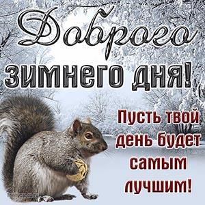Картинка доброго зимнего дня с пушистой белочкой
