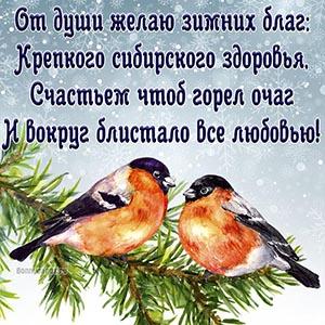 Картинка со снегирями на ветке и зимним пожеланием