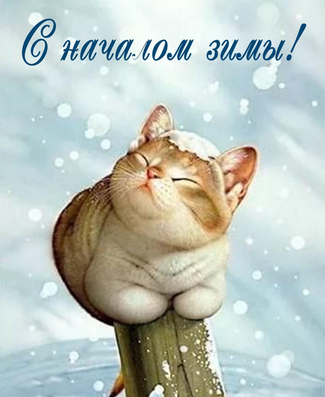 Открытка - красивый котик радуется началу зимы
