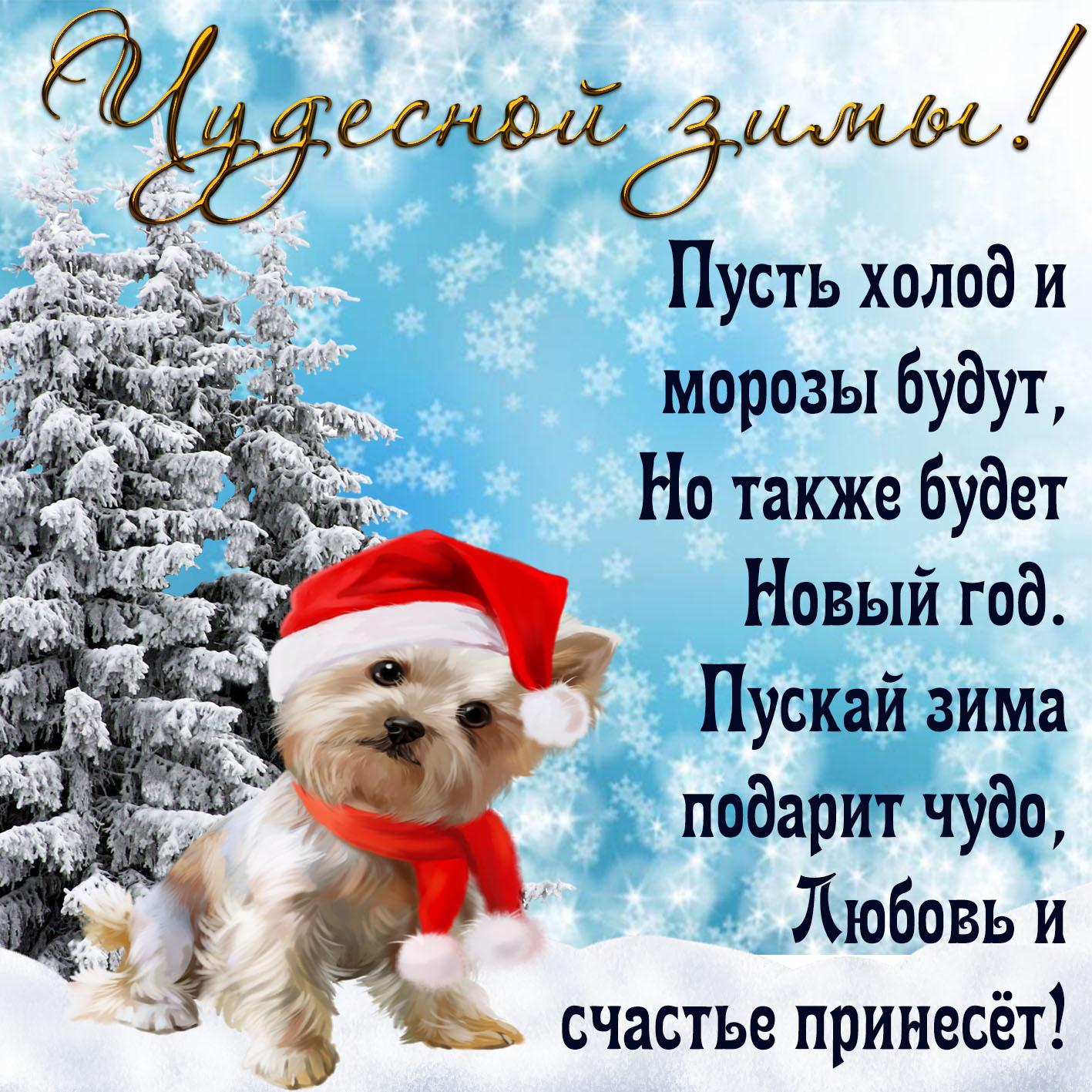 Открытка - забавный пёсик желает чудесной зимы