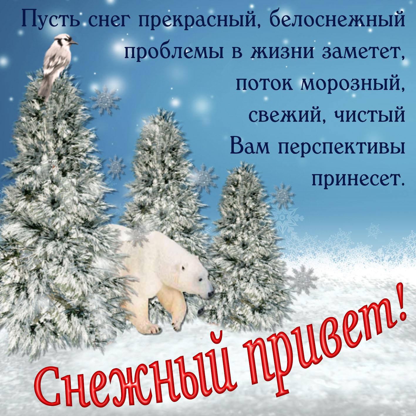 Открытка со снежным приветом от медвежонка